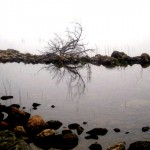 Reflection, 2010
