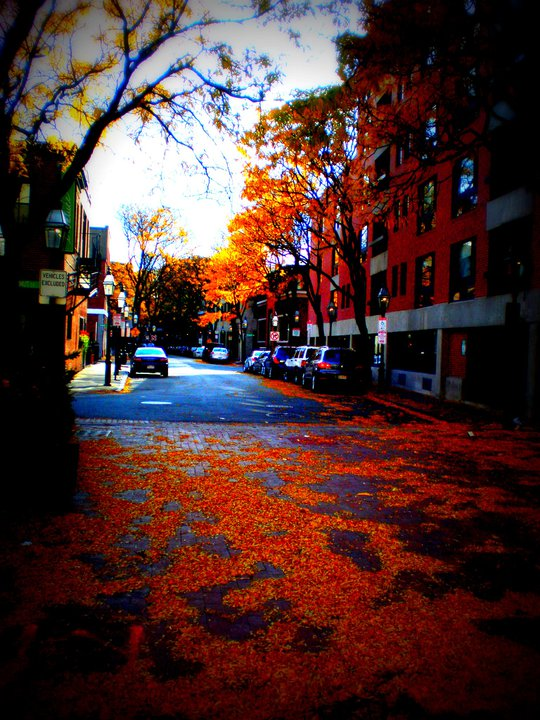South End on an Autumn Day, 2010